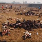Horrific Aftermath Of World's Biggest Ritual Animal Slaughter Pictured