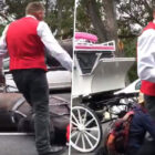 Carriage Driver Kicks Horse In Head After It Collapsed In Busy Road