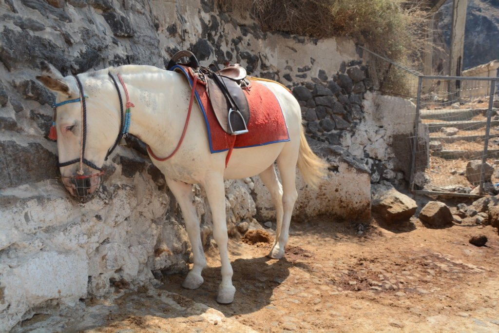 Greek Government Promises Crackdown On Tourist Donkey Rides