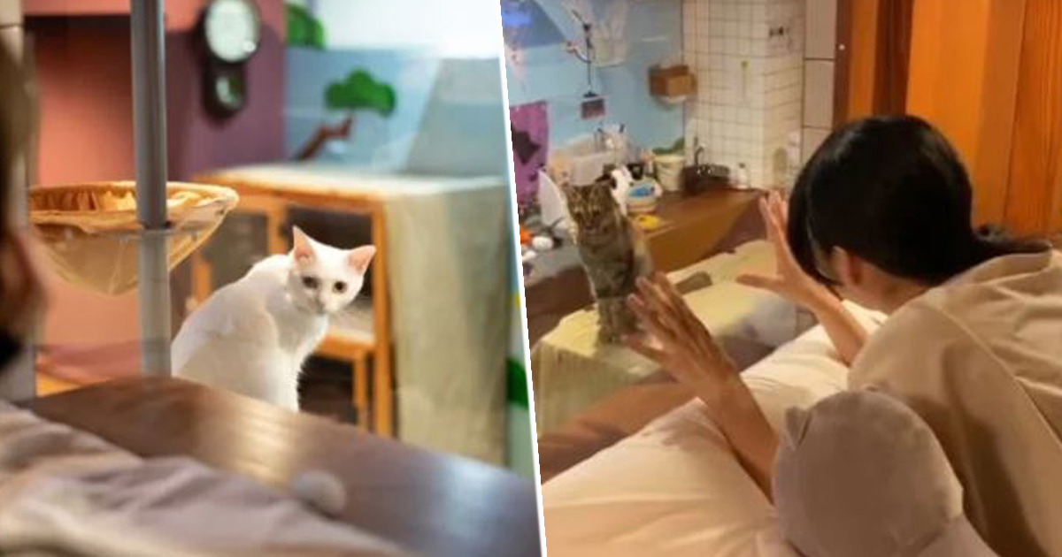 Cat Hotel Lets You Watch Kittens Play Right Outside Your Window