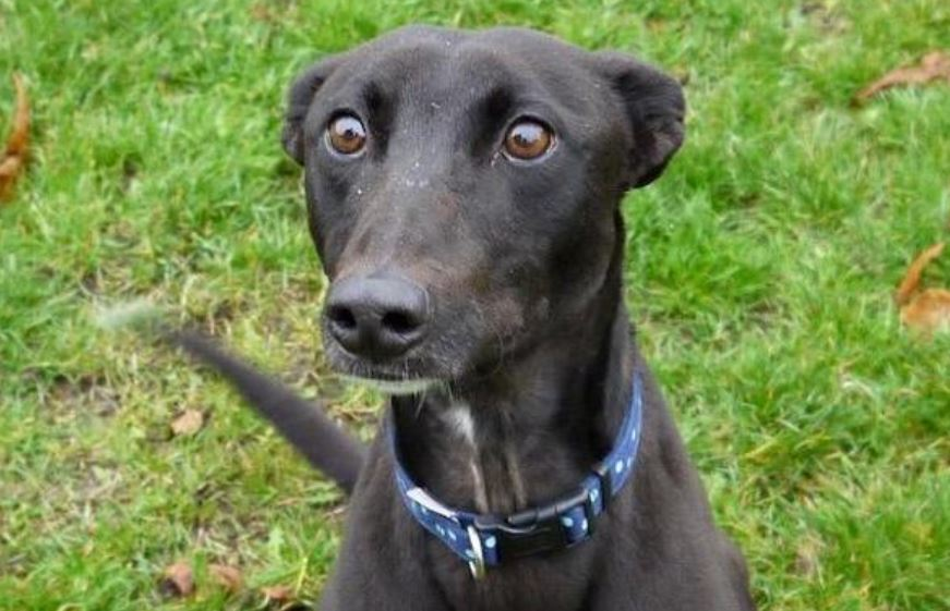 Cecil the dog looking for forever home