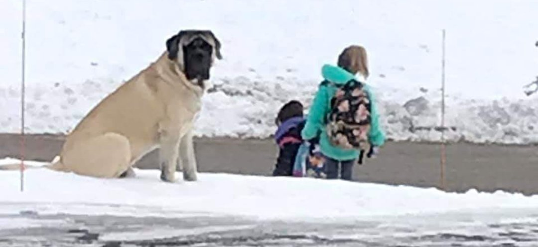 Dog Waits For Kids To Get On School Bus Safely Everyday Before He Leaves