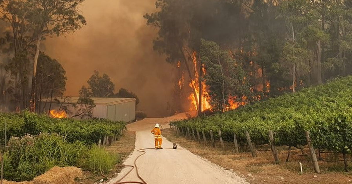 Firefighter And Rescued Koala Watch Helplessly As Raging Bushfire Destroys Its Home