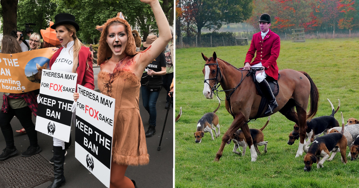 Fox Hunts Meet Across Country 15 Years After They Were Banned