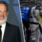 Tom Hanks Wants Disney To Make A Film About Bear The Koala Detection Dog