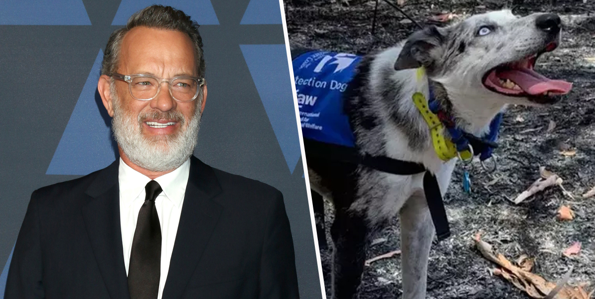 Tom Hanks Wants Disney To Make A Film Bear The Koala Detection Dog