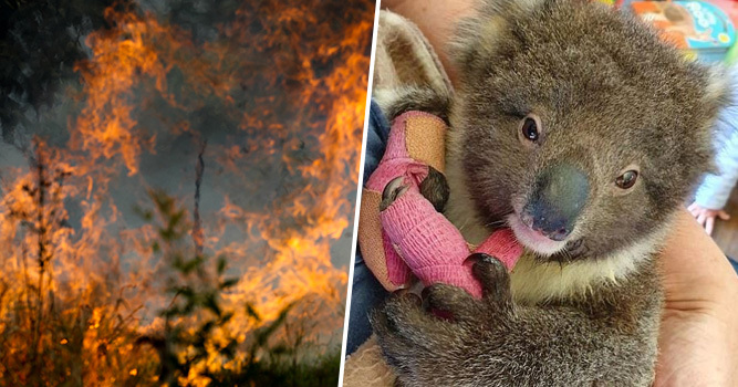 Number Of Animals Feared Dead In Australian Bushfires Soars To More Than 1 Billion