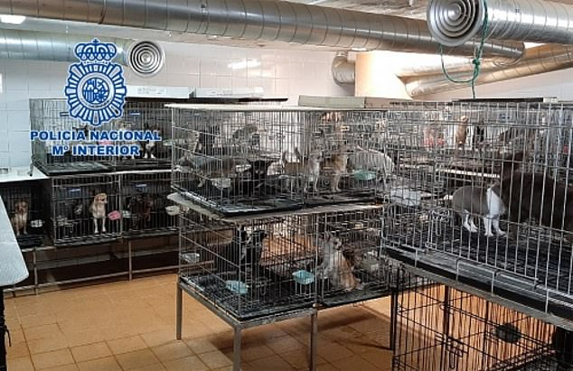 Dogs Rescued From Puppy Farm Madrid 2