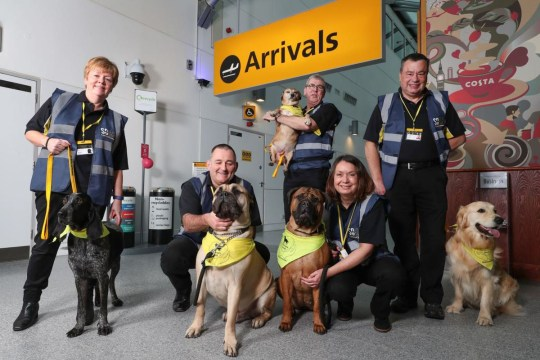 Therapy Dogs UK Airport 2