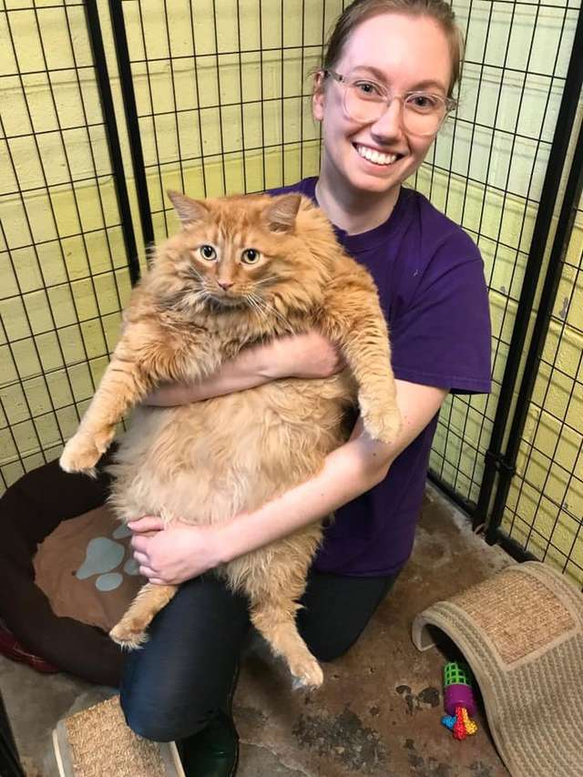 Shelter Staff Take In The Chonkiest Cat They've Ever Seen