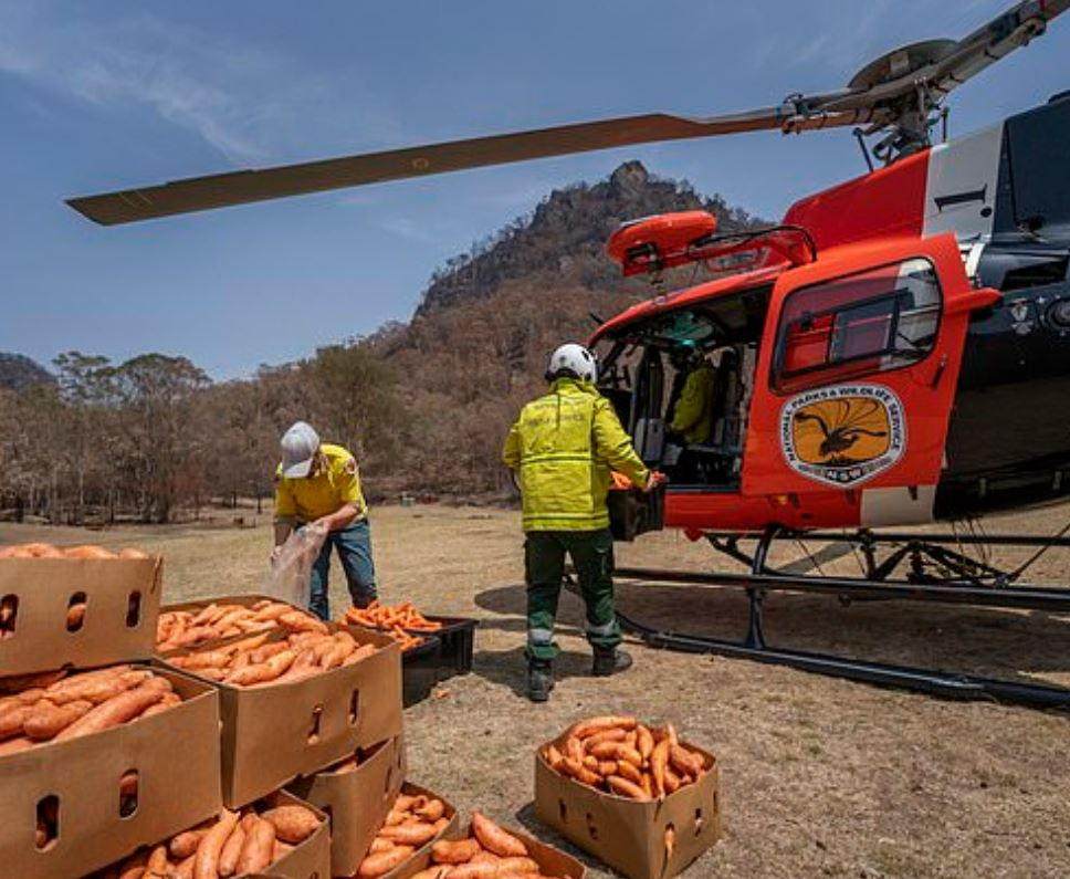 Planes Drop Thousands Of Kilograms Of Carrots And Potatoes For Starving Animals Carrots
