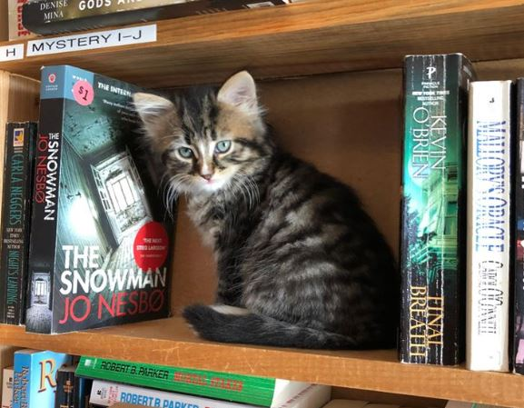 Book shop has cats that you can adopt