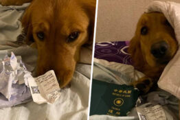 Dog Prevented Owner From Going To Wuhan By Destroying Her Passport