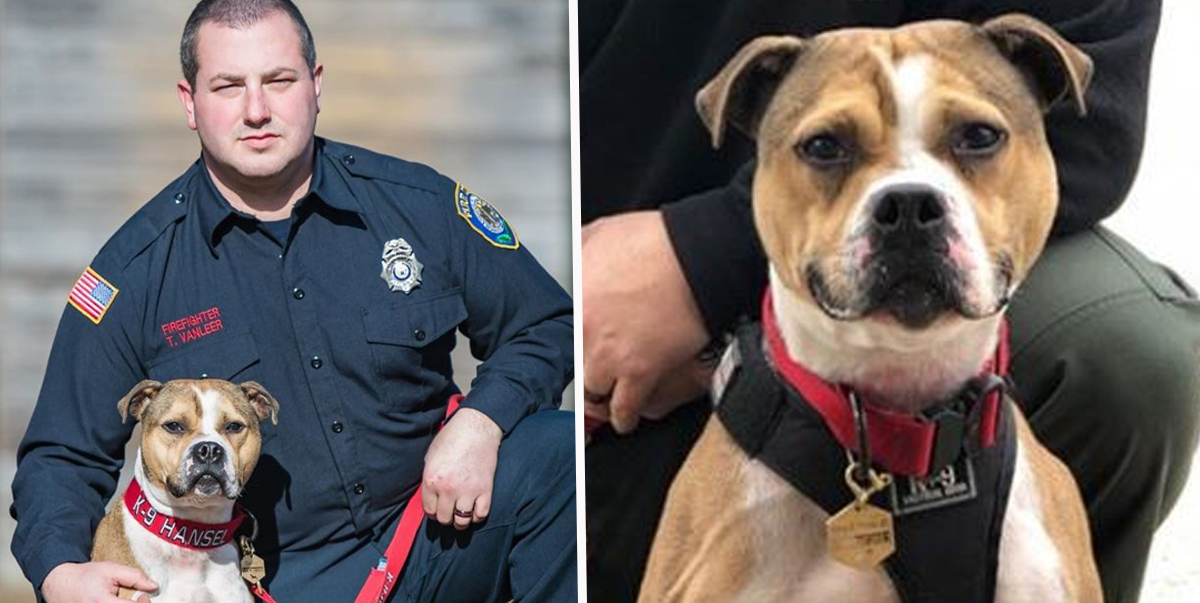 Pit bull becomes first Arson-Detection K9 Officer