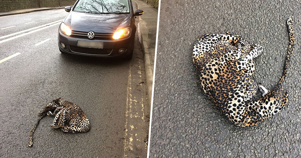 Dad In Stitches Pulling Over To Help 'Injured Leopard' That Turned Out To Be Onesie