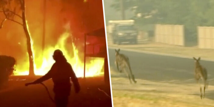 Nearly Half A Billion Animals Have Died In Australian Bushfires Since September