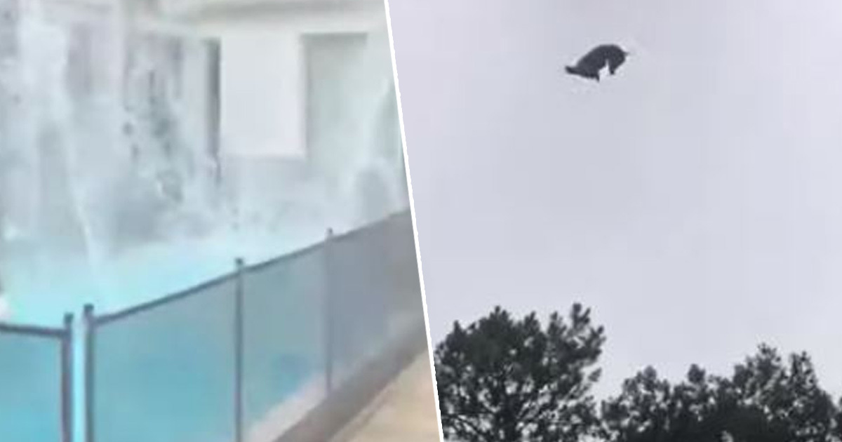 Pig Dropped From Helicopter Into Millionaire's Pool In Cruel Prank