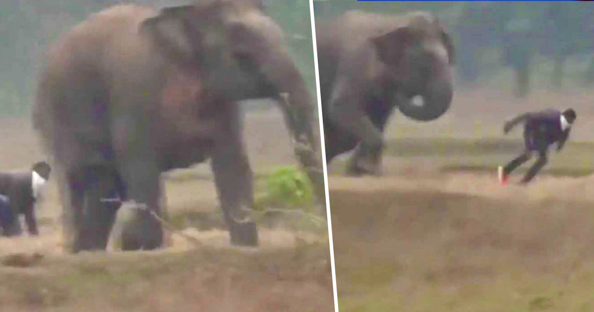 Selfie-Seeker Gets Chased And Caught By Elephant