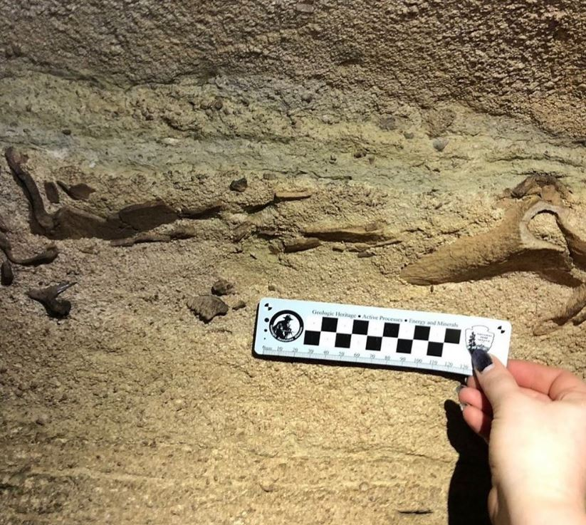 Shark fossil found in Kentucky cave