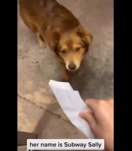 Stray Dog Visits Restaurant Every Day For Free Food