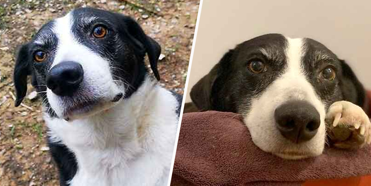 Britain's Loneliest Dog Looking For Forever Home After Decade In Kent Rescue Centre