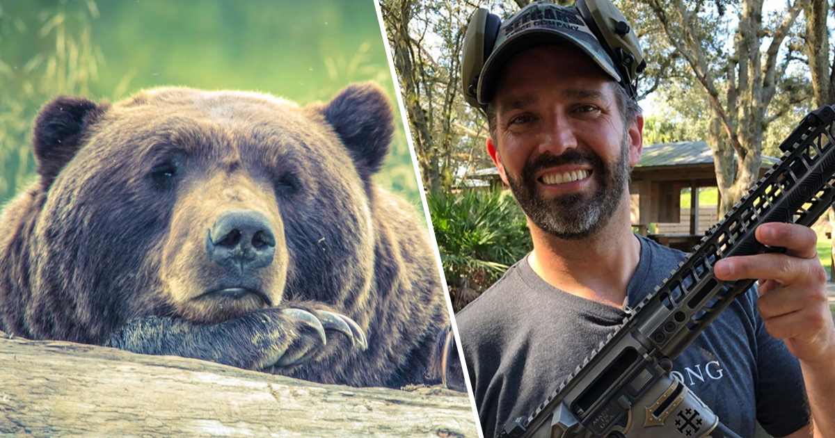 Donald Trump Jr. Given Permit To Hunt Alaskan Grizzly Bear