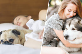 people prefer dogs to relationships 1