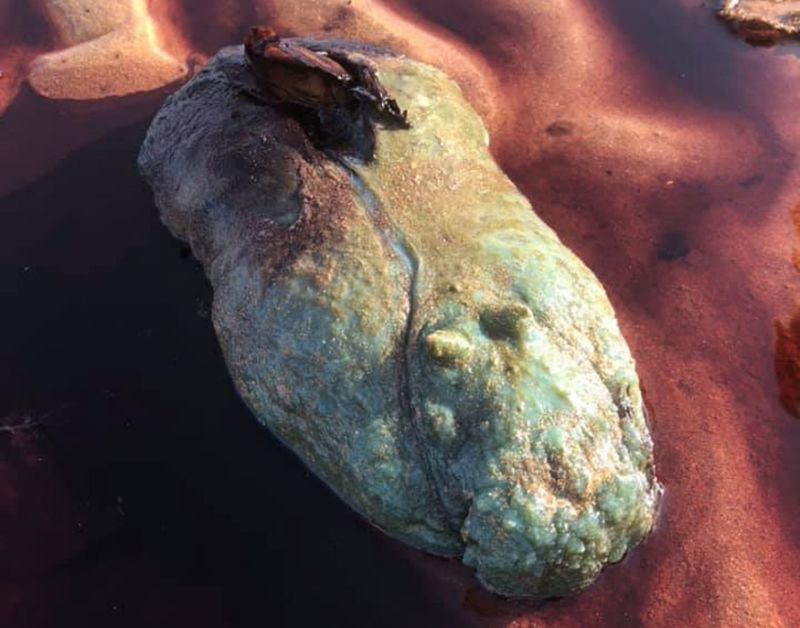 'Alien-Looking' Thing Found On Beach Turns Out To Be 'Dog Killer'