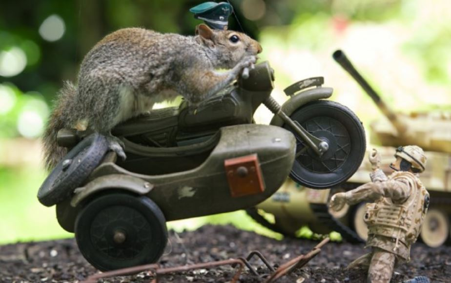 'The Great Escape' recreated with squirrels