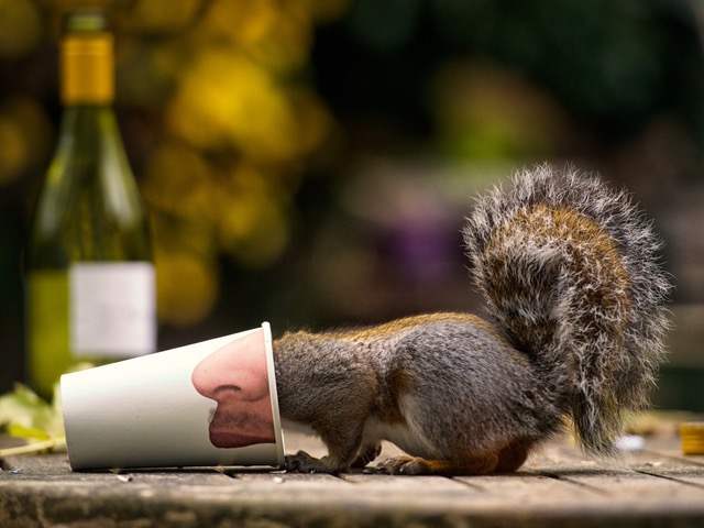 Squirrel in paper cup
