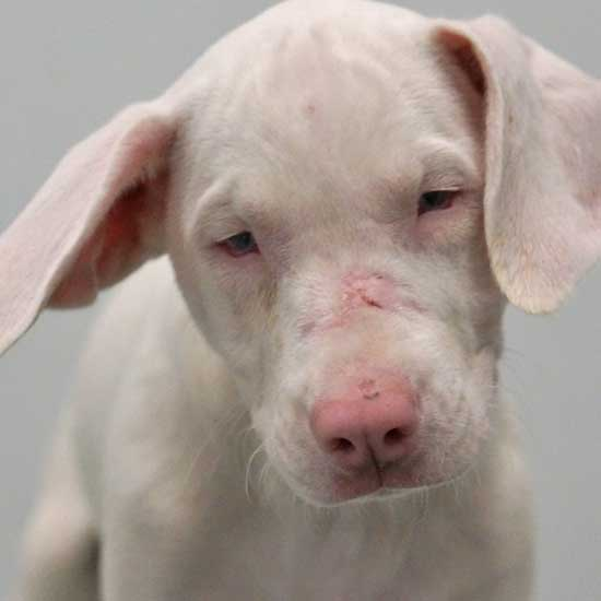 Blind Puppy And Her 'Seeing-Eye Dog' Are Looking For Forever Home Together