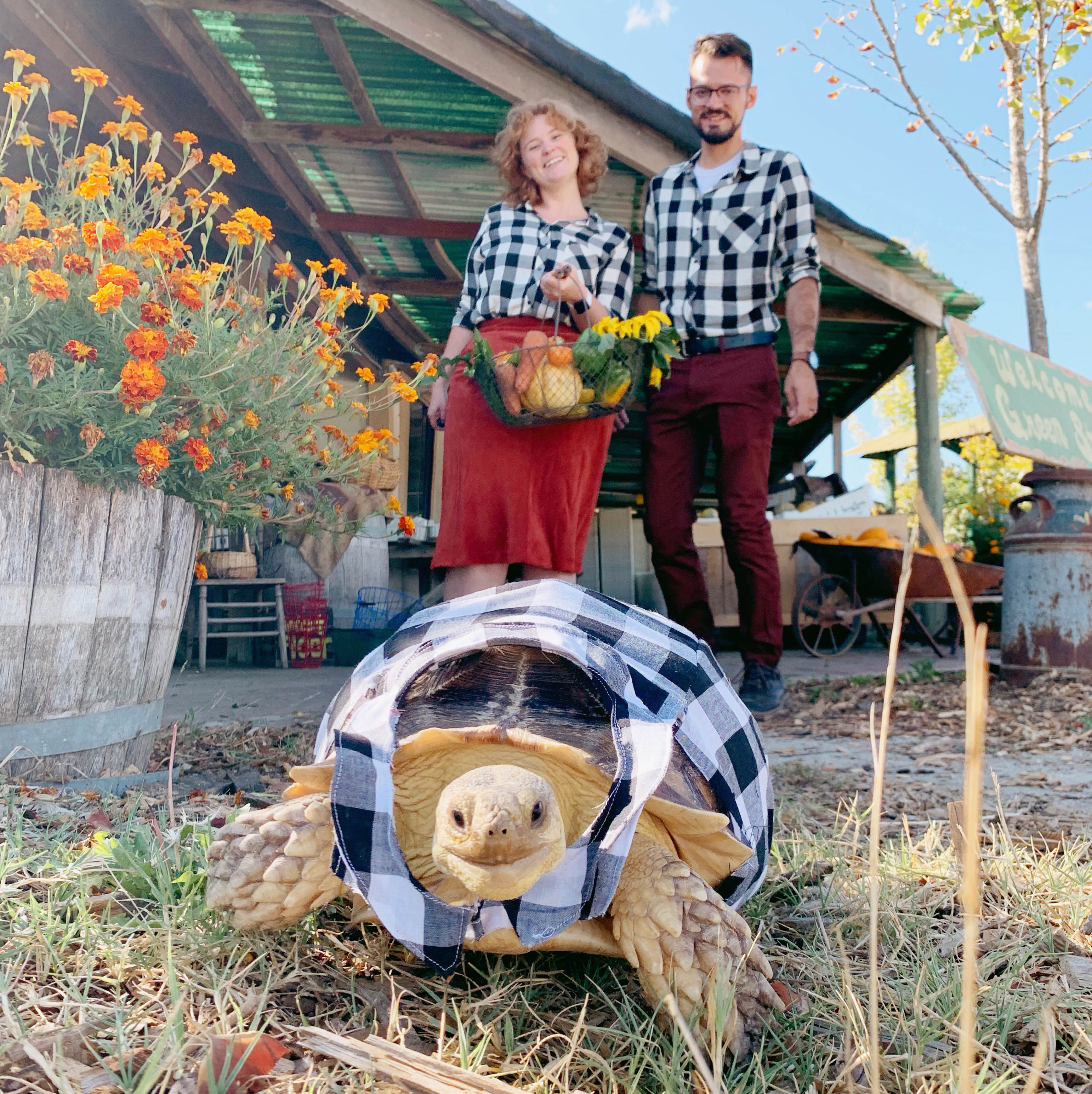 Couple dressed their tortoise in matching flannel shirt