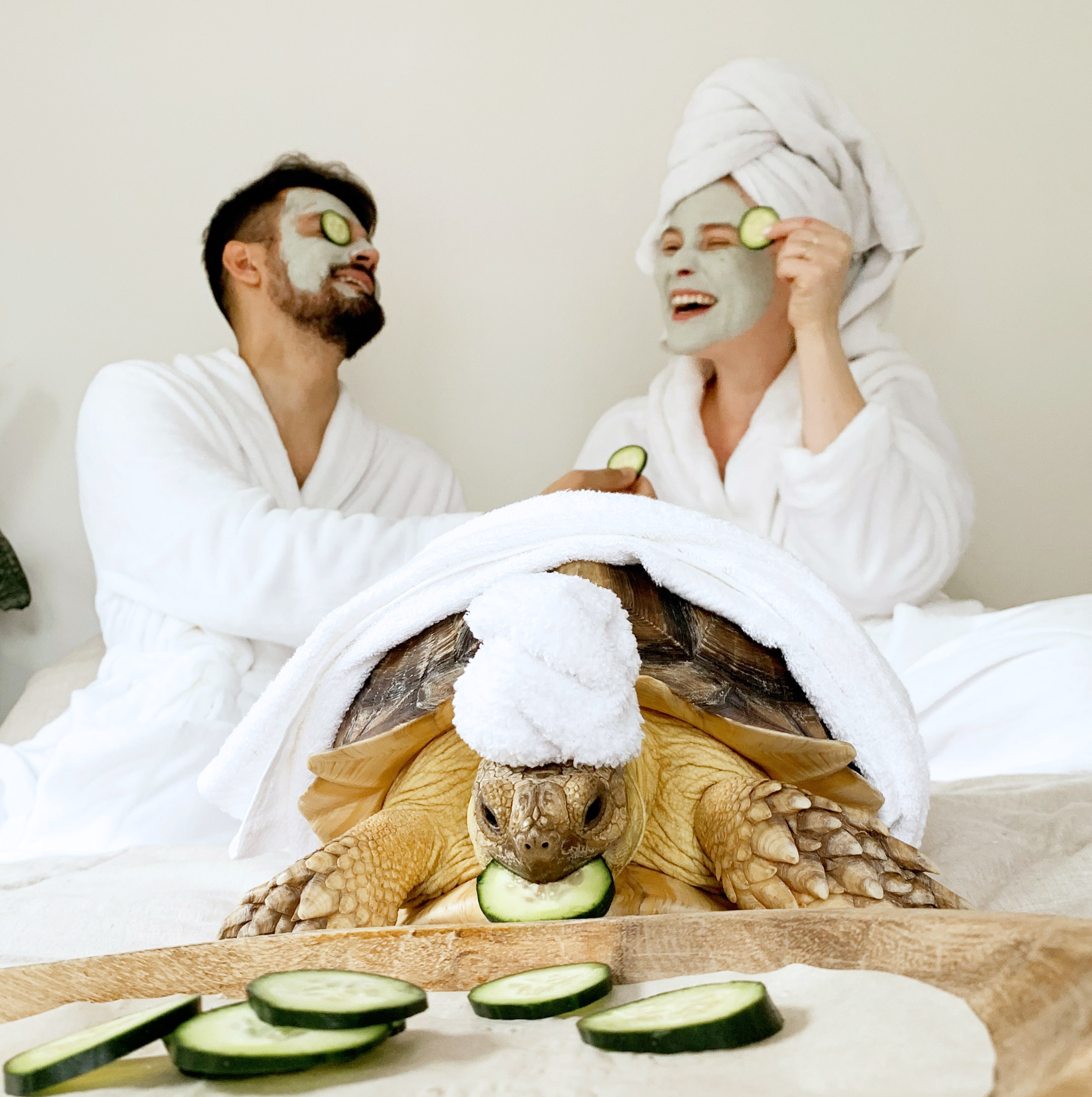 Couple dress their tortoise in matching spa day outfit