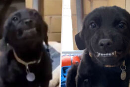 Adorable Puppy That Went Viral For His Wide Smile Finds Forever Home