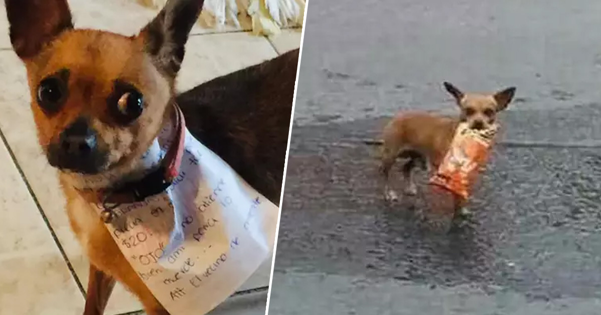 Mexican Man In Self-Isolation Sends Dog To Store To Get Bag Of Cheetos