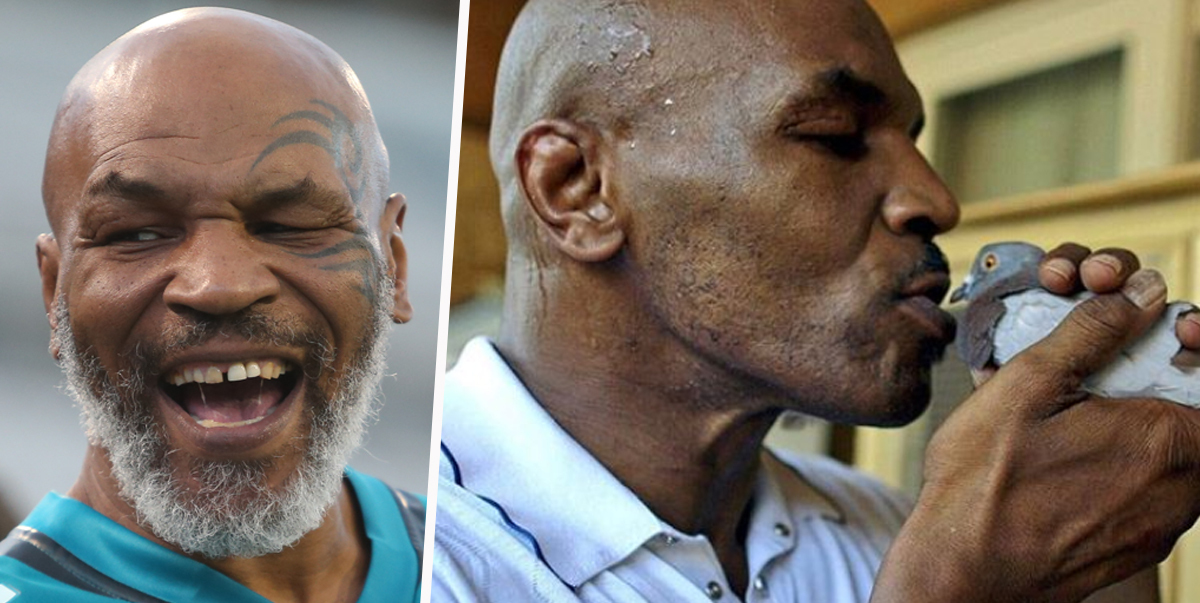 Mike Tyson Admits Knocking Out Binman Over His Pigeon