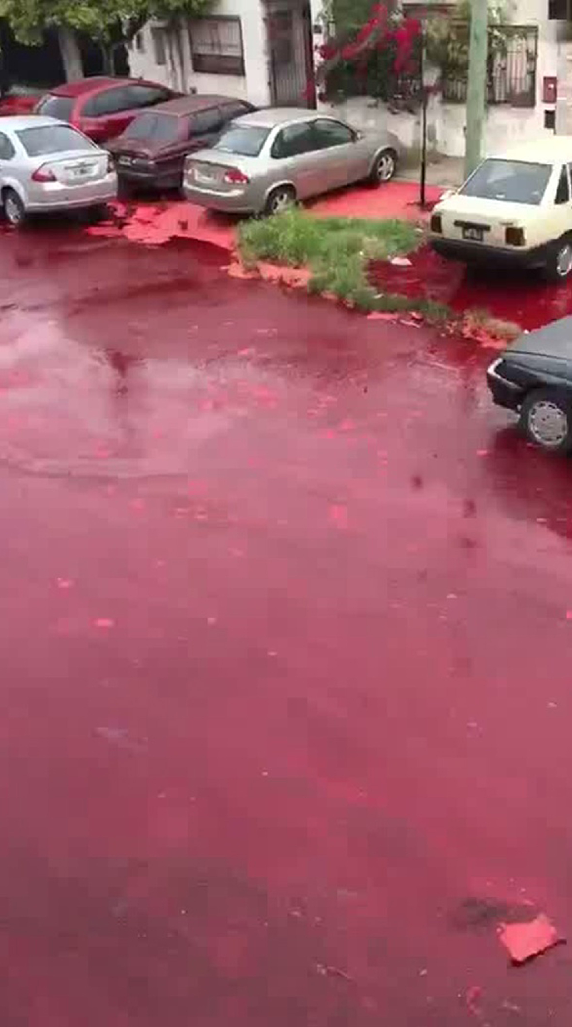 Streets covered in blood after slaughterhouse incident