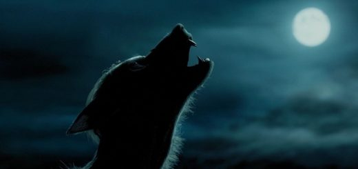 Werewolf Cats Are Real And One Of Nature's Strangest And Most Terrifying Breeds