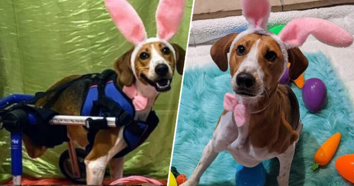 Two-Legged Dog Called Lieutenant Dan Is Officially The New Cadbury's Bunny