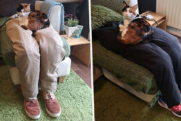 Couple Trick Super Clingy Cat By Creating Fake Lap For Her To Sit On