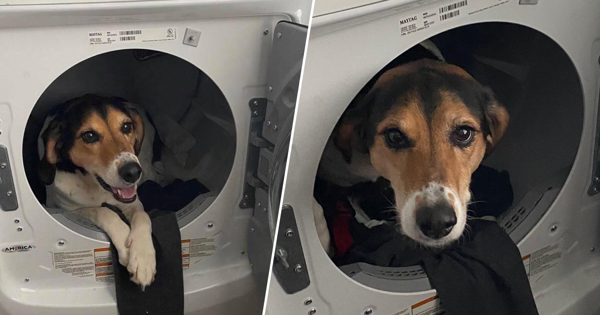 Woman's Day Saved By Accidental Text Of Dog Chilling In Dryer
