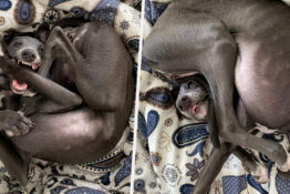 Hilarious 'Pretzel' Dog Surprises Owner With Its Unusual Poses