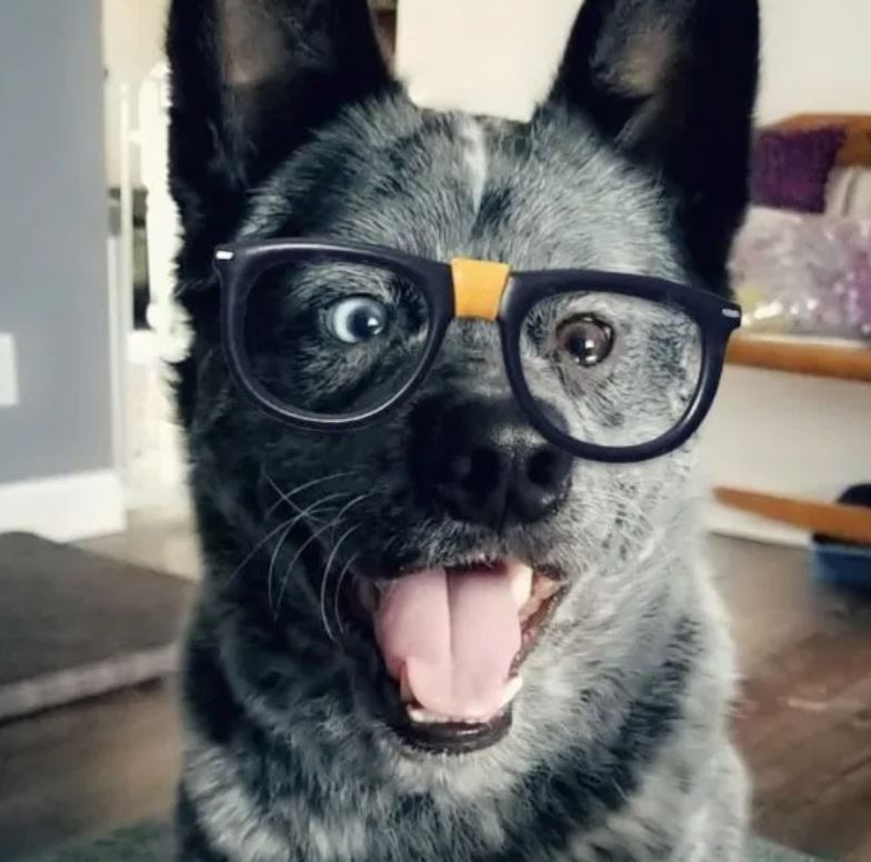 Miracle dog wears glasses