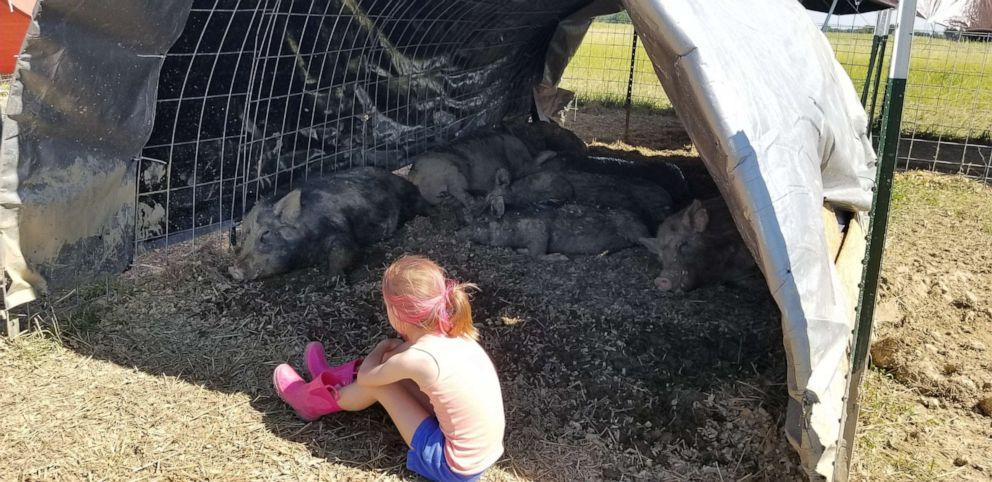 9-Year-Old Girl Starts Organisation To Save The Lives Of Unwanted Pet Pigs