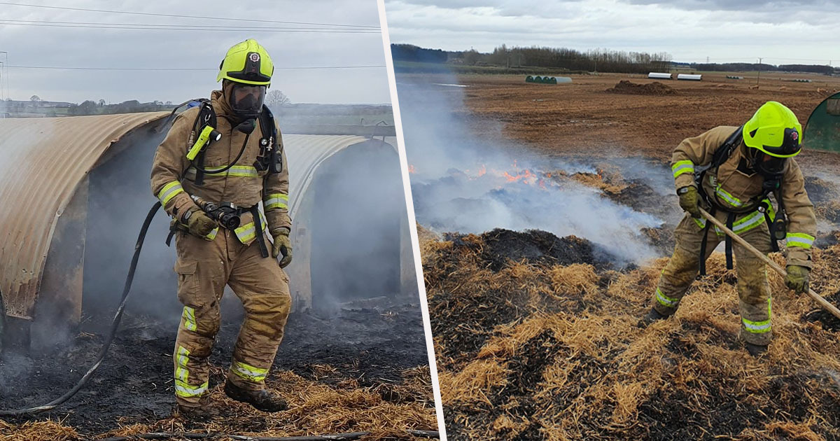 Peckish Pig Starts Farm Fire After Sh*tting Out Pedometre That Burst Into Flames