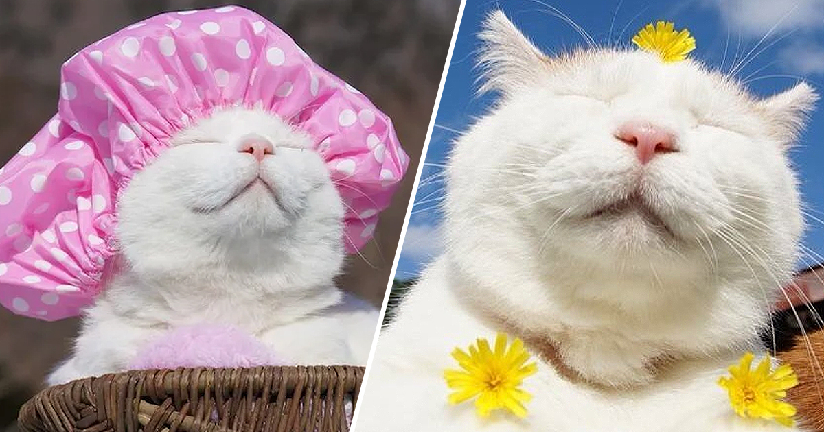 Shiro, The Most Relaxed Cat On Earth, Passes Away Aged 18