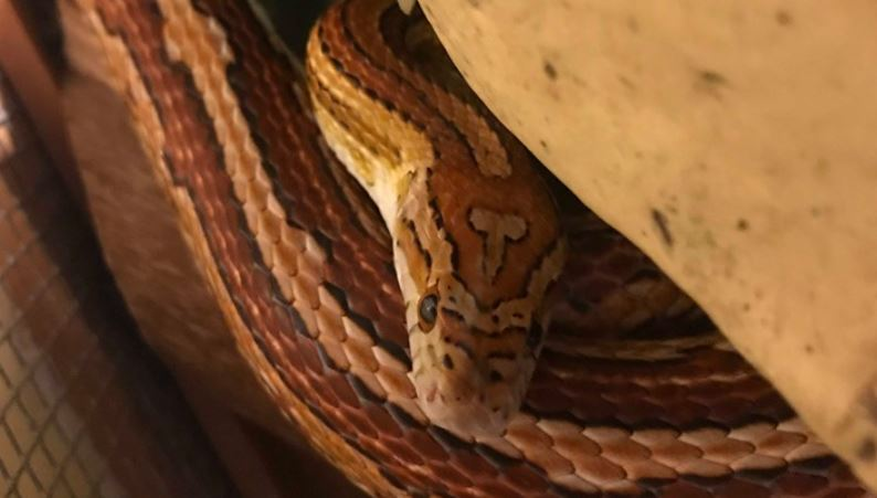 Mum Names Pet Snake D*ckhead For Unique Skin Mark