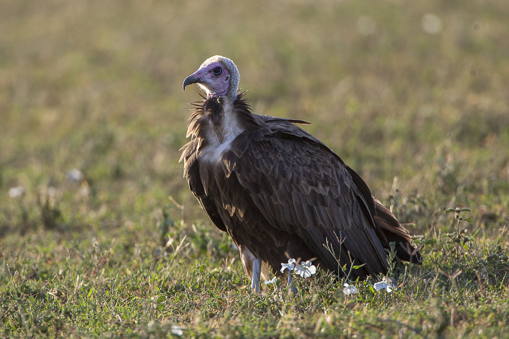 More Than 2,000 Birds Mysteriously Die In Biggest Vulture Mortality Event Ever