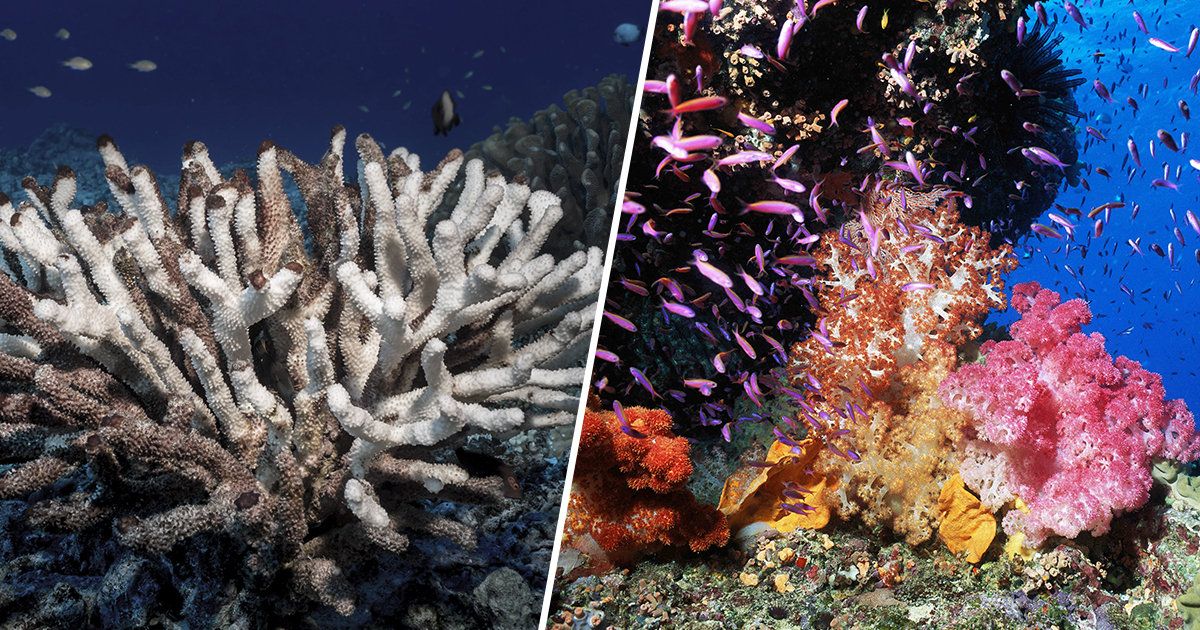 Great Barrier Reef Can Be Saved With 3D Printed Coral, Experts Believe