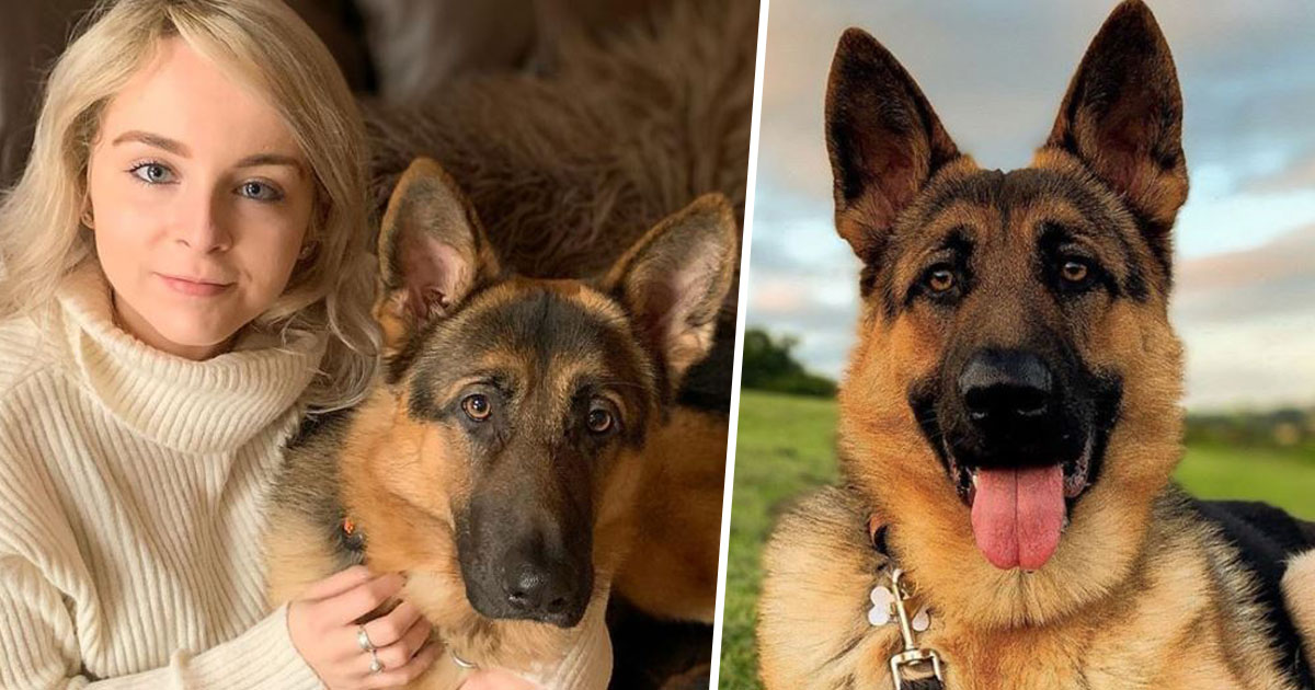 Support For Bionic German Shepherd With Hidden Illness Helps Restore Faith In Humanity